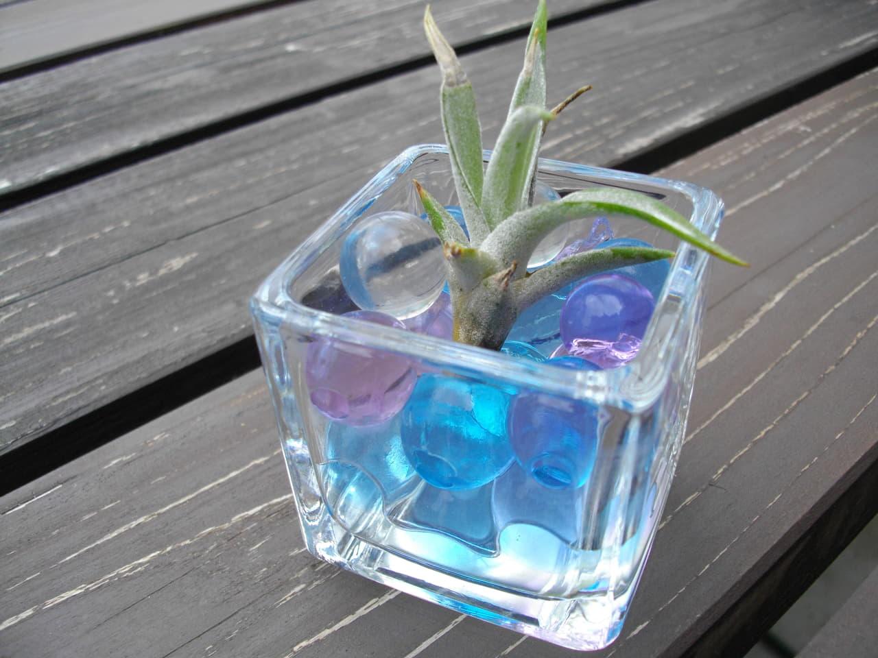 マニアが教える観葉植物の土おすすめランキングtop10 To Buy