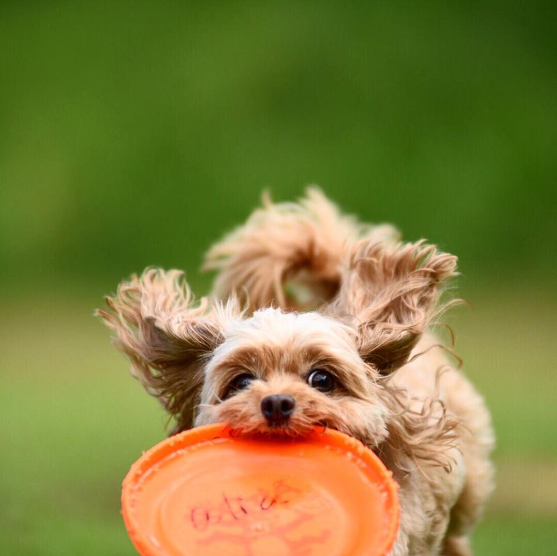 犬 フリスビー フライングディスク