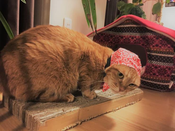 お気に入りの猫用爪とぎ器を探す