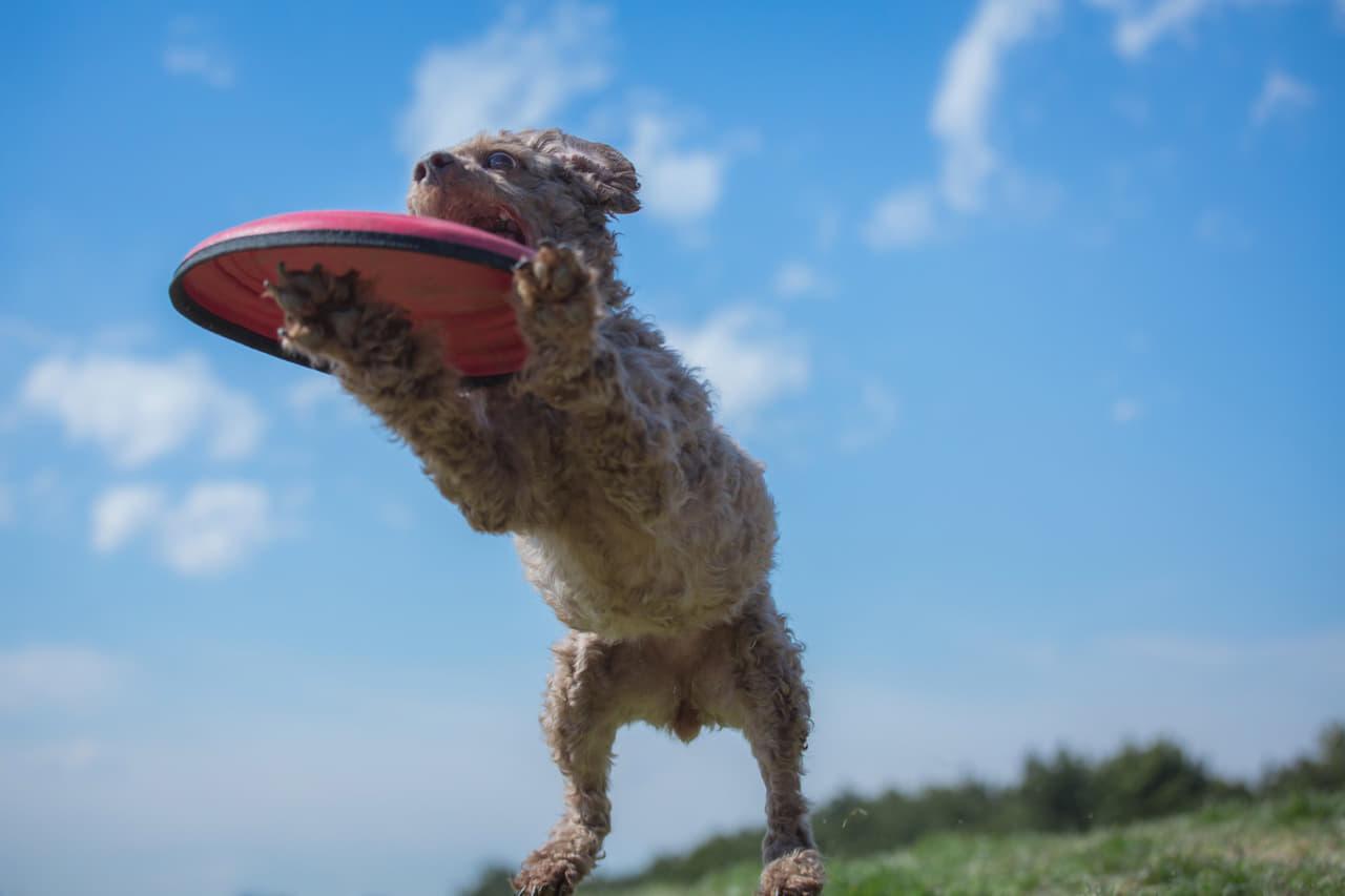 ワンコが本気で喜ぶおもちゃはコレ 犬用おもちゃおすすめランキング