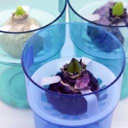 水栽培ガラスベース