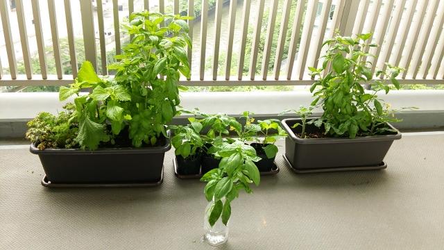 庭用家庭菜園用プランター