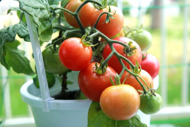 家庭菜園用プランター
