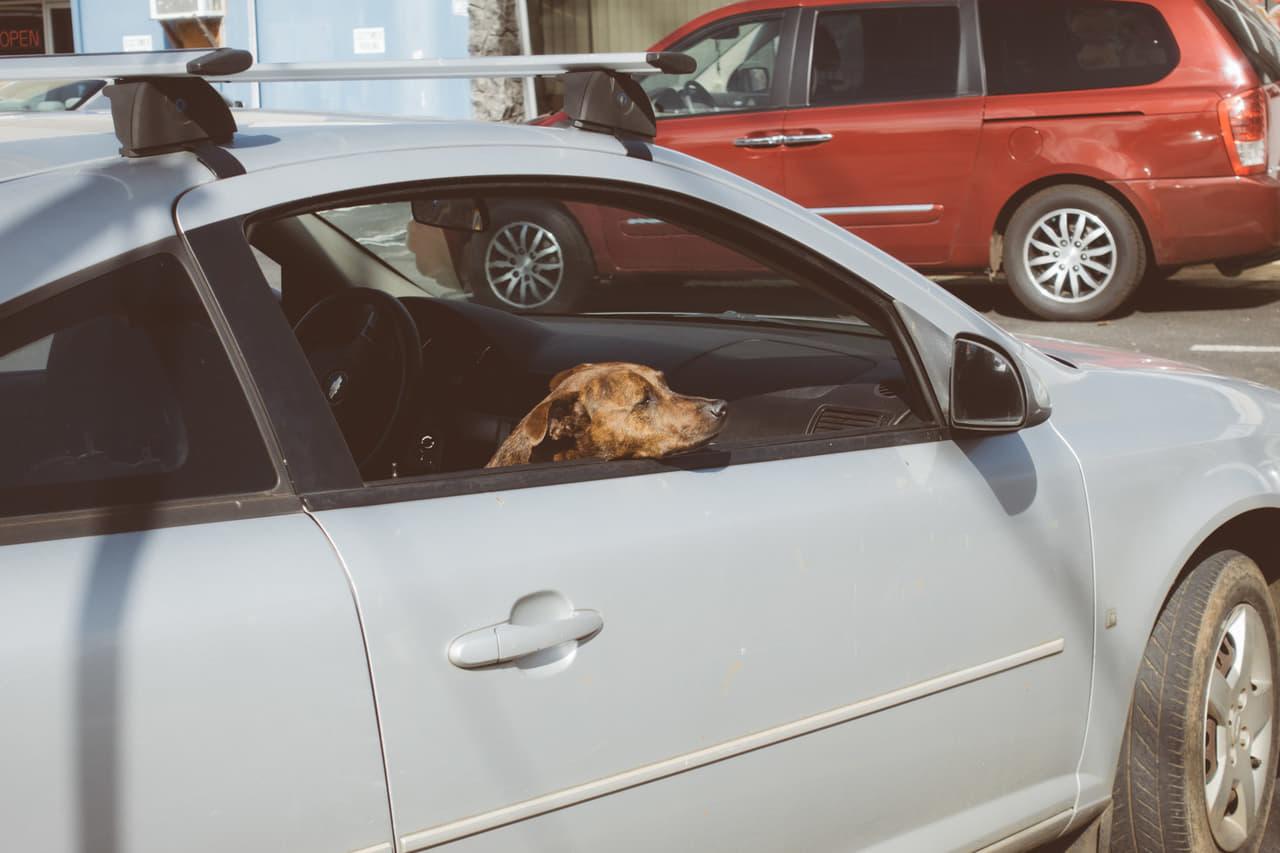 ドライブ 犬