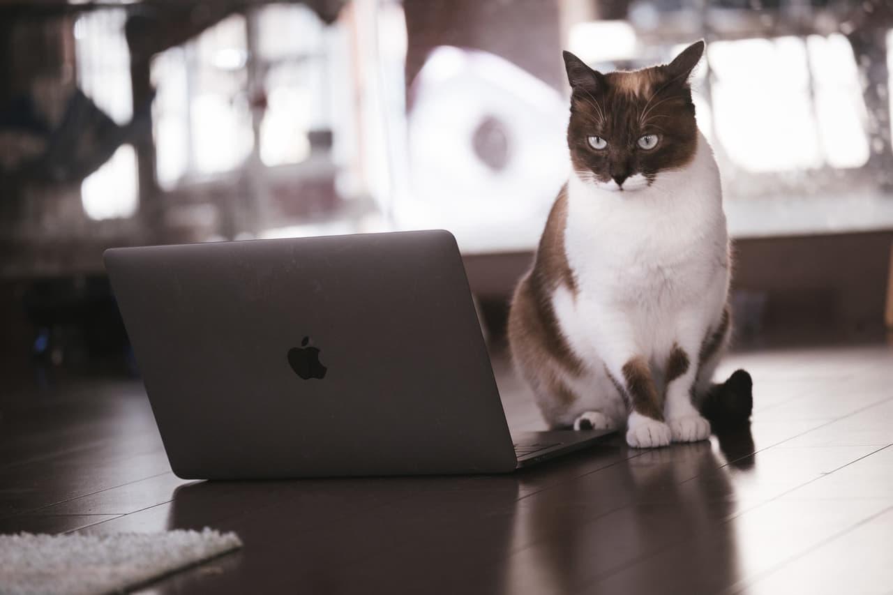 猫 パソコン
