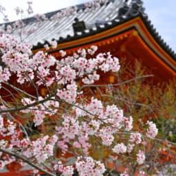 京都 観光 お土産