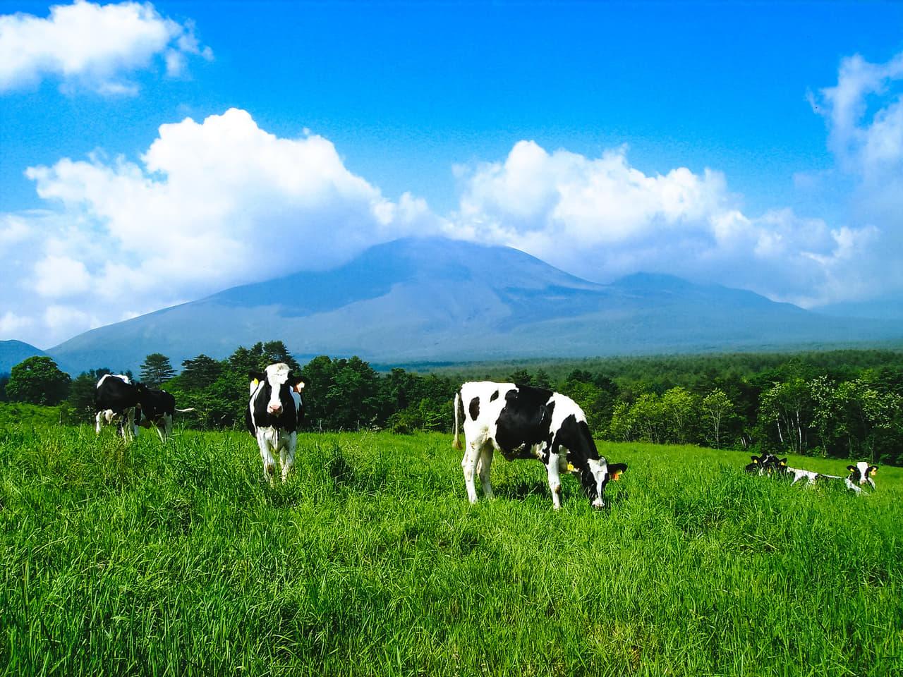 北海道 牛 自然