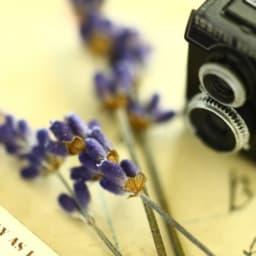 小さなカメラとラベンダーの画像