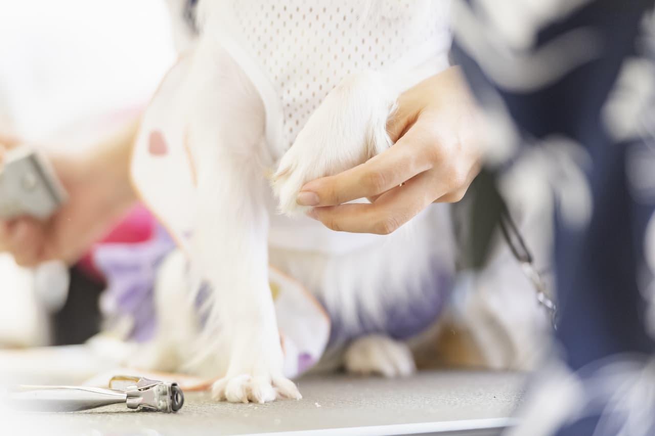 犬をトリミングする女性の画像