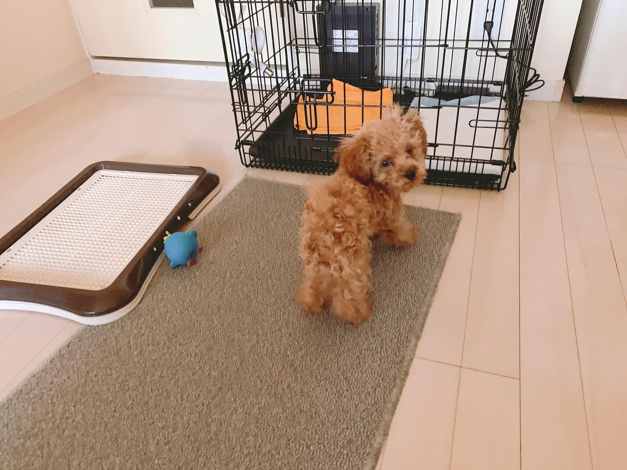 犬用トイレトレー