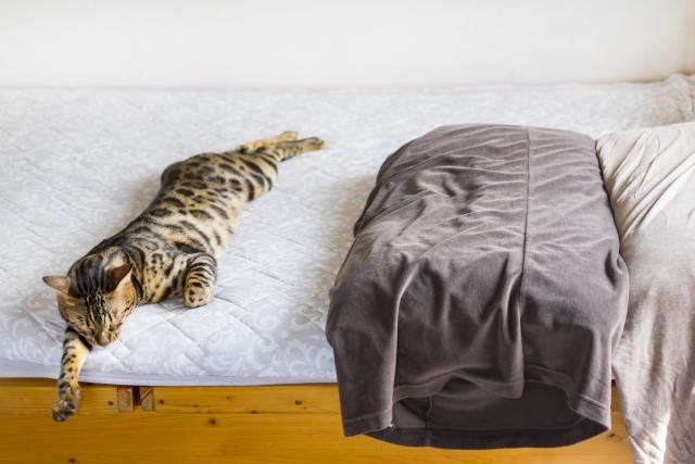 布団に寝転がる猫