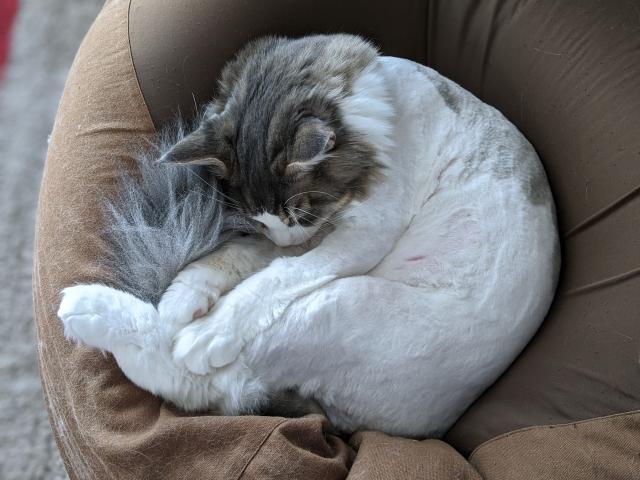クッションで丸まる猫